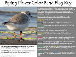Flags That Are Orange White And Green Banded Bird Bonanza Birdquiz Net