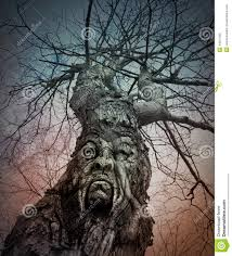 old scary tree with angry face in woods stock photo image 44821355