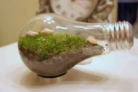 what to do with old light bulbs light bulb terrarium and 5 new uses for old light bulbs green prophet