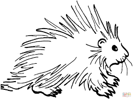 porcupine drawing images