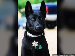 belgian malinois police georgia deputy shoots kills police dog after it attacks him