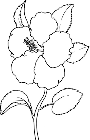 yellow hibiscus coloring printable pages flower