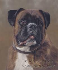 boxer dog art 21 best dog portraits by me images on pinterest dog portraits
