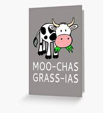 cow greeting cards cow greeting cards redbubble