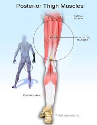 Picture Of Human Knee Muscles Hamstring Injury Symptoms Recovery U0026 Treatment