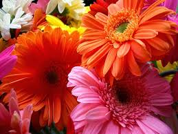 beautiful flowers images gallery many flowers