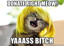 Yasssss Meme - donate right meow yaaass bitch yasss cat 1 meme generator