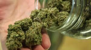 Weed Maps San Diego by City Of Lemon Grove Preparing For Medical Marijuana Dispensaries