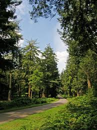 blackwater arboretum map new forest an interactive tourist and