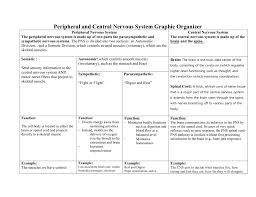 Cranial Nerves Worksheet Peripheral And Central Nervous System Graphic Organizer