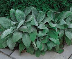 Plants For Patios In The Shade Perennials For The Edge Fine Gardening