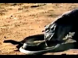 film ular phyton ular 2013 vidimovie