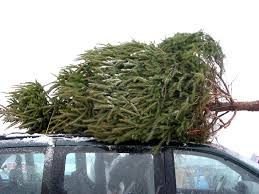 christmas tree pick up home design ideas