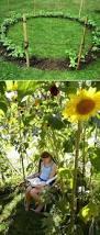Cute Backyard Ideas by Best 25 Sunflower House Ideas On Pinterest Sunflower Garden