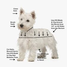 yorkie hair cut chart west highland terrier westie grooming video dvd scissors chart