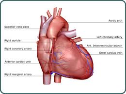 Right Side Human Anatomy Writing From The Right Side Of The Heart U2013 Indies Unlimited
