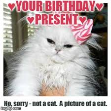 Happy Kitten Meme - image tagged in birthday happy birthday birthday present cat
