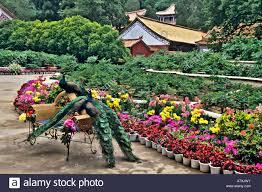 Chair In Garden Asia China Yunnan Chuxiong Region Wuding Peacocks On Wicker
