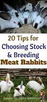 309 best rabbits and quail images on pinterest meat rabbits