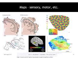 2010 12 01 Archive 26th August 2013bio Neurobiology Organization Nervous