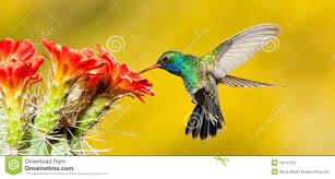 animals and birds stock photos and royalty free images