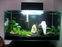 aquarium decoration ideas freshwater decoration aquarium lost world tips for how to safely decorate