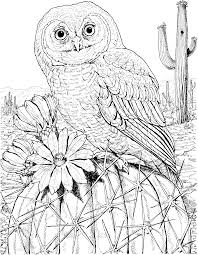 desert owl coloring page pin by barbara skidgel on cactus drawings pinterest mandala