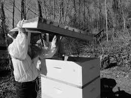 Backyard Beehive Backyard Beehives