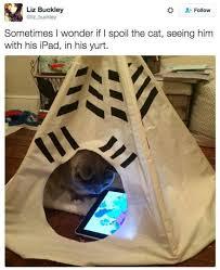 The Best Cat Memes - 37 of the best cat memes the internet has ever made