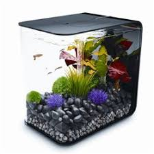 best 25 biorb fish tank ideas on biorb biorb ideas