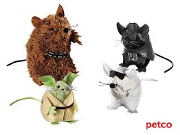 Star Wars Dog Halloween Costumes 55 Star Wars Pets Images Animals Starwars Dog