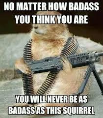 Meme Badass - badass squirrel meme by butboy555 memedroid