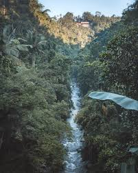 rural ubud the other side of bali we love it wild
