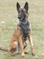 belgian shepherd howling if belgian malinois barks too much belgian malinois harness