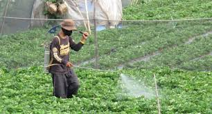 image of a farmer spraying insecticides
