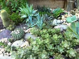 Rock Garden Succulents How To Create A Rock Garden For Low Water Gardening