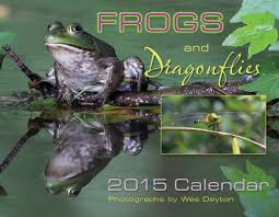 frogs are green posters frogs are green