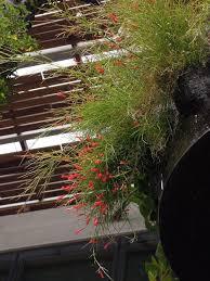 Vertical Gardens Miami - 83 best patrickblanc images on pinterest green walls vertical