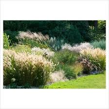 8 best plant materials for houston ornamental grasses images on
