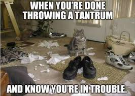 Tantrum Meme - funny cat pictures when you re done throwing a tantrum and know
