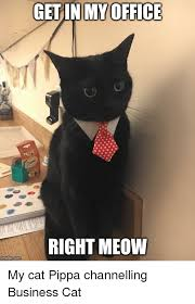 Business Cat Memes - office cat meme 100 images don t be one of the 47 virtual office