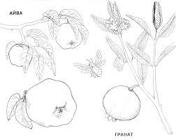 fruit and berries coloring pages 11 fruit and berries kids