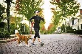 dog walking pet sitting puppy training pembroke hanover