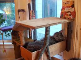 Free Diy Cat Furniture Plans by 177 Best A House Full Of Kitties Images On Pinterest Cat Stuff