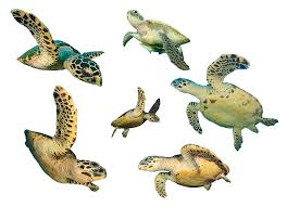 learn nature types turtles learn nature