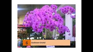 Orchids Facts by Cooktown Orchid Youtube