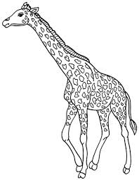 print u0026 download giraffes coloring pages