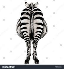 zebra back fulllength sketch vector graphics stock vector