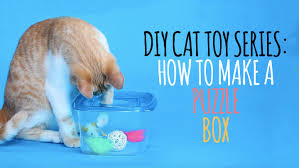 diy cat toys how to make a puzzle box youtube