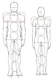 Pictures Of Anatomy Of The Human Body Best 25 Body Proportions Ideas Only On Pinterest Figure Drawing